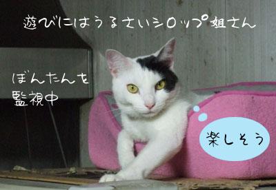 あ!?_a0064067_1333726.jpg