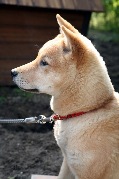 初めて犬を飼ってみて_b0123467_14153469.jpg