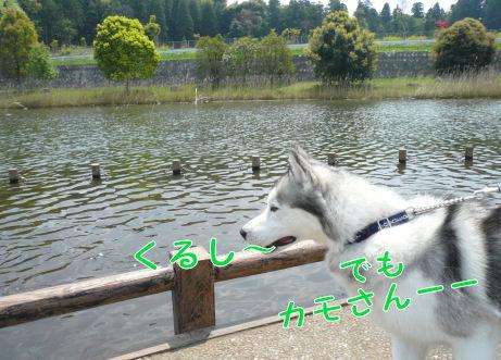 f0112407_126418.jpg