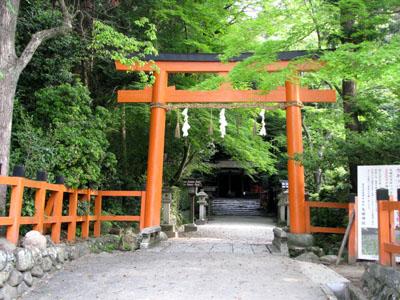 カキツバタ 太田神社_e0048413_20525762.jpg
