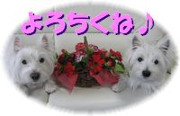 f0084422_1530161.jpg