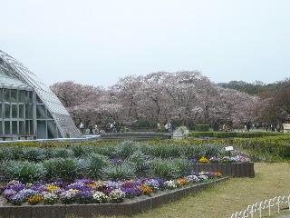 京都府立植物園 バラのチンチン_b0054727_132811.jpg