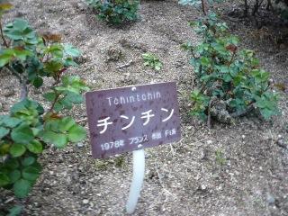 京都府立植物園 バラのチンチン_b0054727_303760.jpg