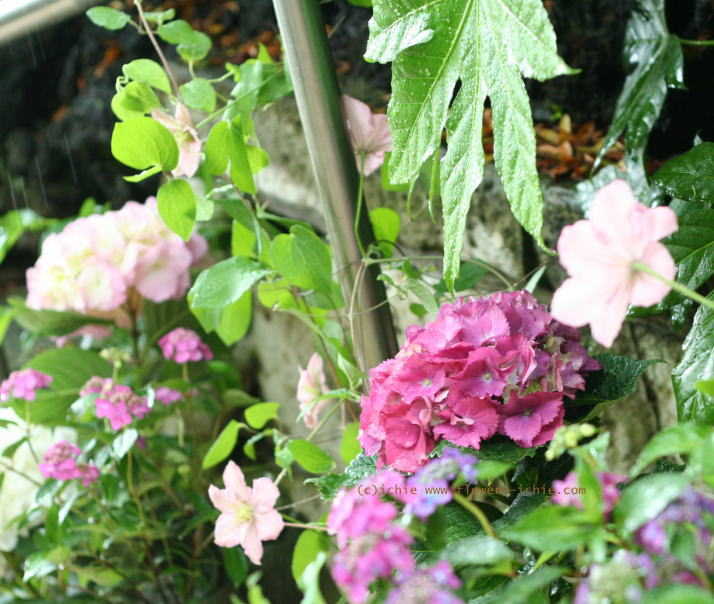 5月のしずく ラビュットボワゼ様の装花_a0042928_20282234.jpg