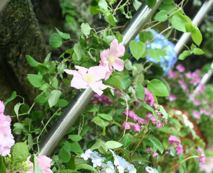 5月のしずく ラビュットボワゼ様の装花_a0042928_20435279.jpg