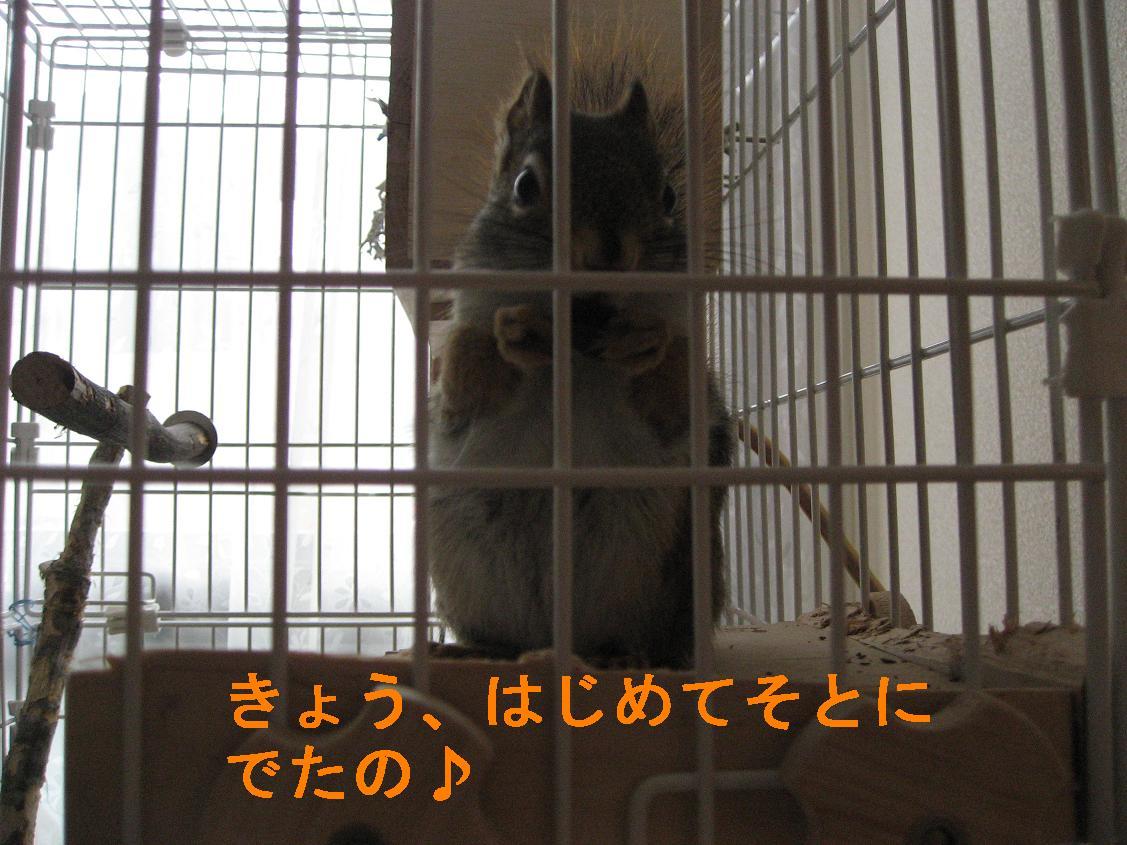 b0138734_1541120.jpg