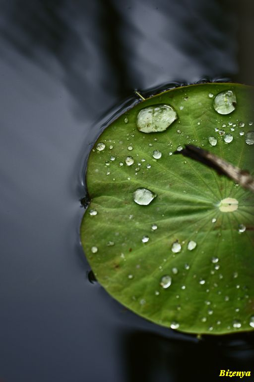 雨上がりの葉たち_d0086248_211819.jpg