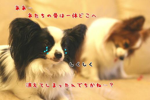 d0013149_151196.jpg