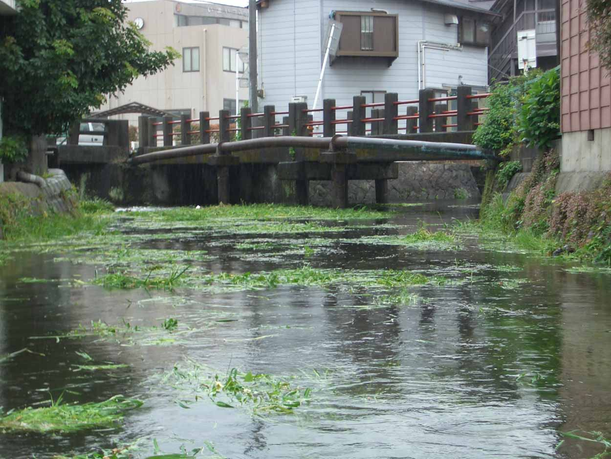 「頭数」がものを言う沼川と田宿川の清掃_f0141310_23512428.jpg