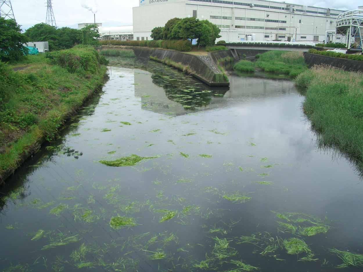 「頭数」がものを言う沼川と田宿川の清掃_f0141310_23515216.jpg