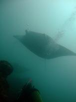 [ダイビング]海の中の明暗_a0043520_23214814.jpg