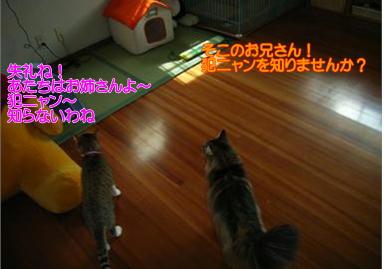 d0139352_085249.jpg