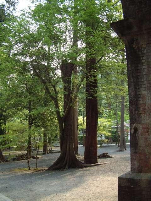 青葉が誘う 新緑の京都!散歩編①_f0029571_0221026.jpg