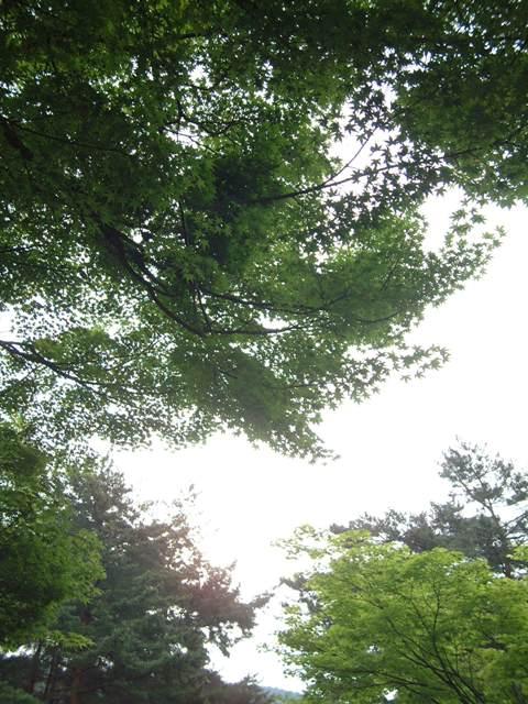 青葉が誘う 新緑の京都!散歩編①_f0029571_07861.jpg