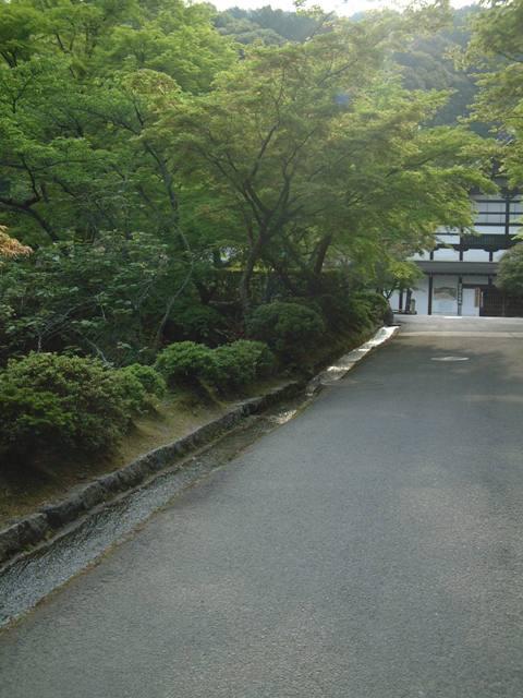 青葉が誘う 新緑の京都!散歩編①_f0029571_085090.jpg