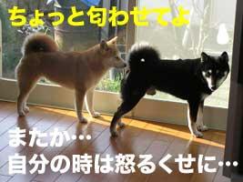 b0057675_1349494.jpg