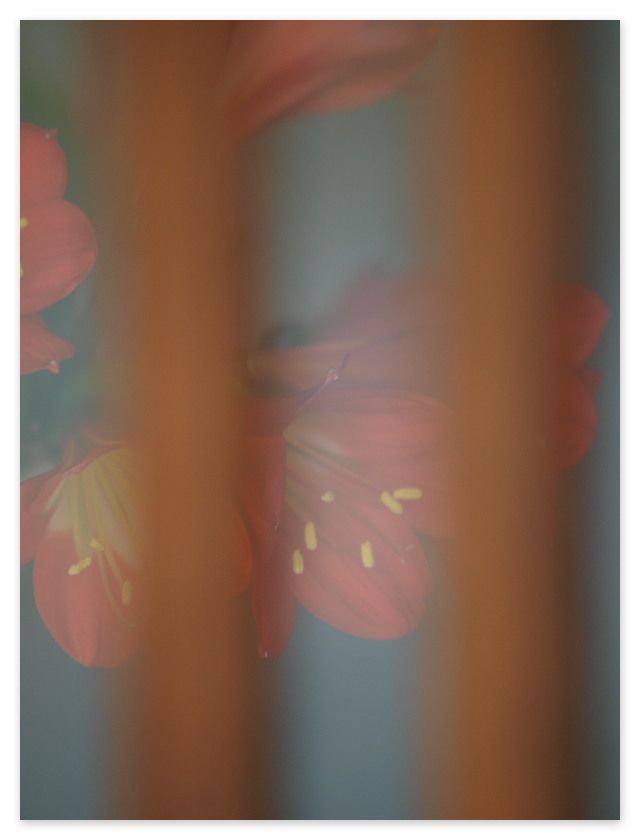 c0021726_19524948.jpg
