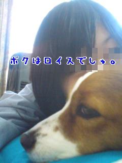 d0013149_8165473.jpg