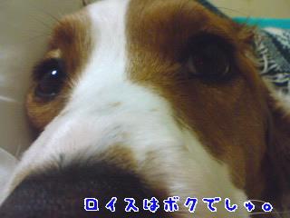 d0013149_8185085.jpg
