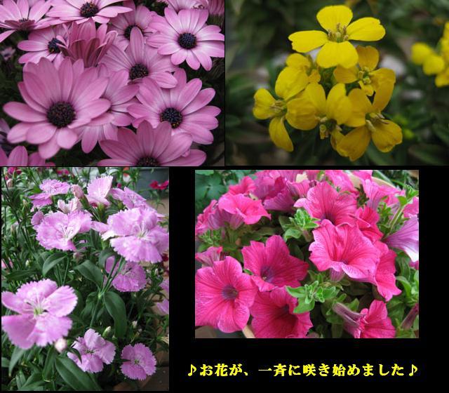 f0110488_1745996.jpg