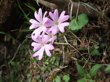 金時山の花  Vol.  35_e0024094_11325614.jpg