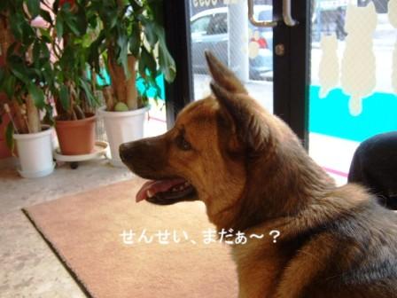 b0087400_2311996.jpg