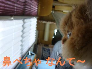 f0138304_12173559.jpg