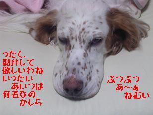 b0113725_2120849.jpg