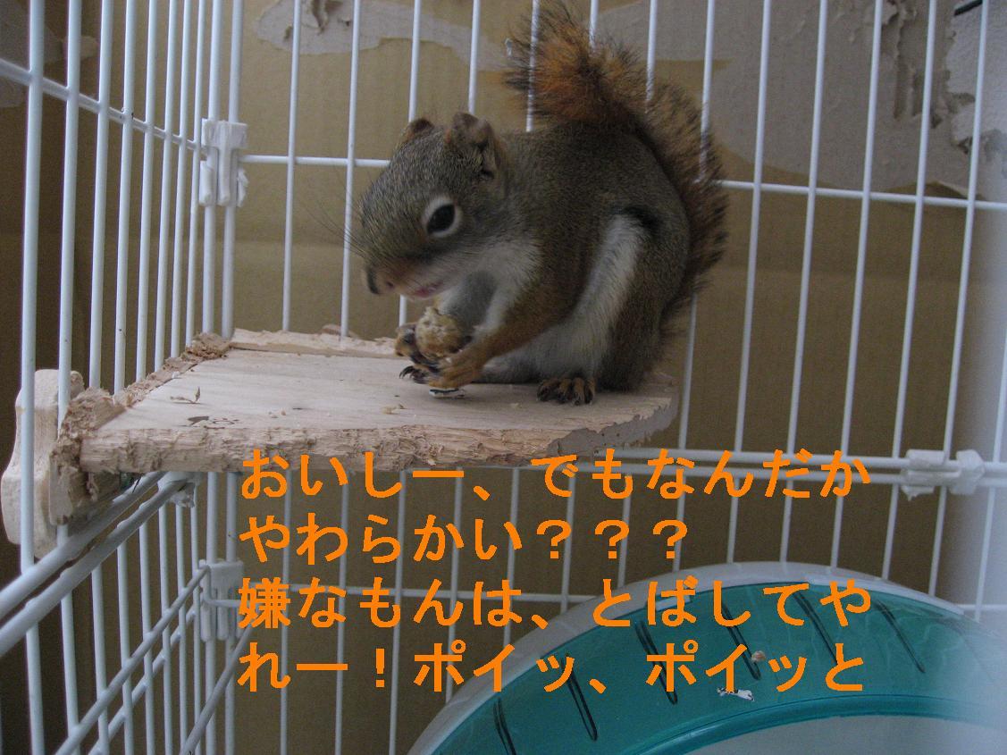 b0138734_9581192.jpg