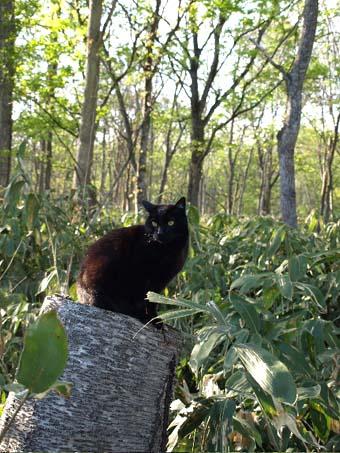 猫さんパラダイス_a0094336_1027592.jpg