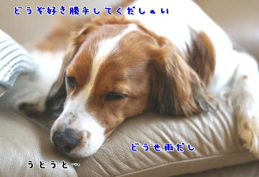 d0013149_8113553.jpg