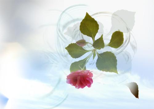 一輪の花._b0133890_16352986.jpg