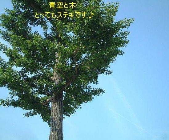 d0079701_1925648.jpg