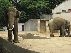王子動物園へ。<アクティブライフ芦屋・グループホーム>_c0107602_15291847.jpg