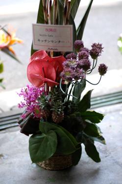 花だらけ~**_a0082146_1463617.jpg
