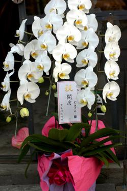 花だらけ~**_a0082146_1504398.jpg