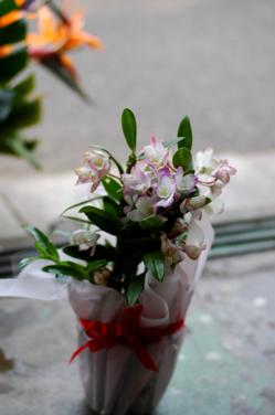 花だらけ~**_a0082146_1514913.jpg