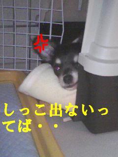 b0122046_1201045.jpg