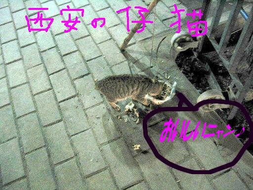f0161151_18272773.jpg