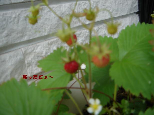 f0110199_8261638.jpg