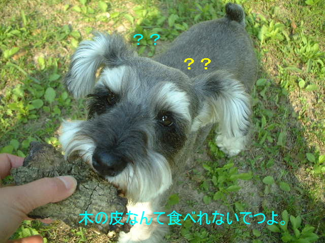 d0079701_20432170.jpg