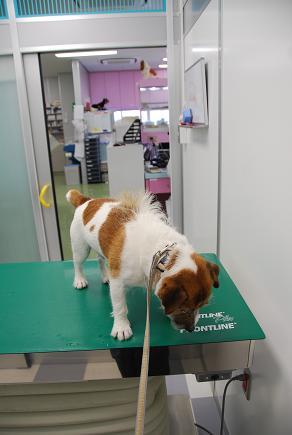 動物病院の一日_c0099133_010312.jpg