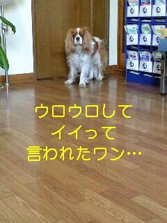 b0130636_18464584.jpg