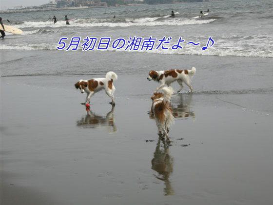 d0001985_10412979.jpg