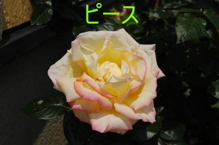 c0130324_139318.jpg
