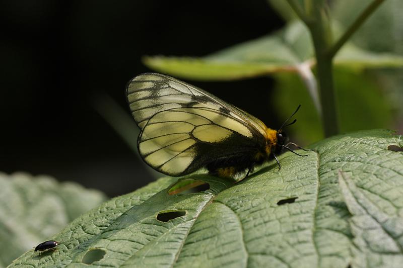 2008年5月中旬 初夏の蝶の五目撮り(マクロ編)_d0054625_2130643.jpg