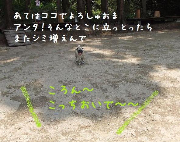 d0074531_17563655.jpg