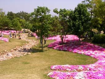 花と緑の空間。_f0045132_1611163.jpg
