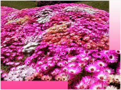 花と緑の空間。_f0045132_16113041.jpg