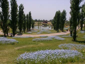 花と緑の空間。_f0045132_16115217.jpg
